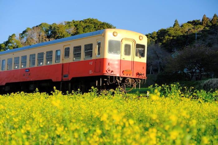 石神の菜の花と小湊鉄道5