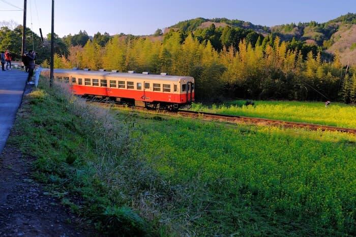 石神の菜の花と小湊鉄道6