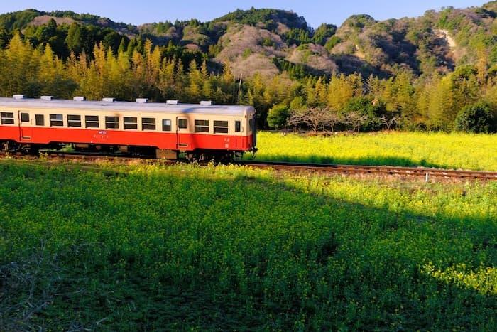 石神の菜の花と小湊鉄道7