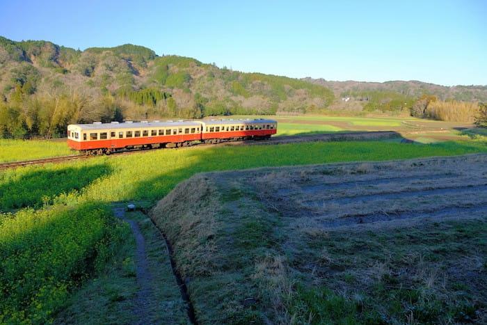 石神の菜の花と小湊鉄道8