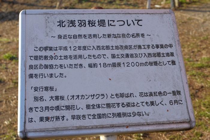 北浅羽桜堤について