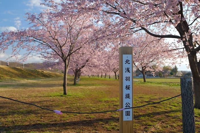 北浅羽桜堤公園で撮影