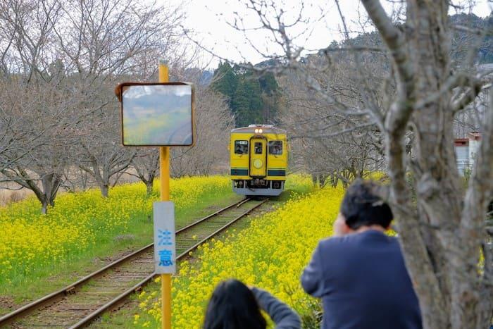 総元駅の菜の花