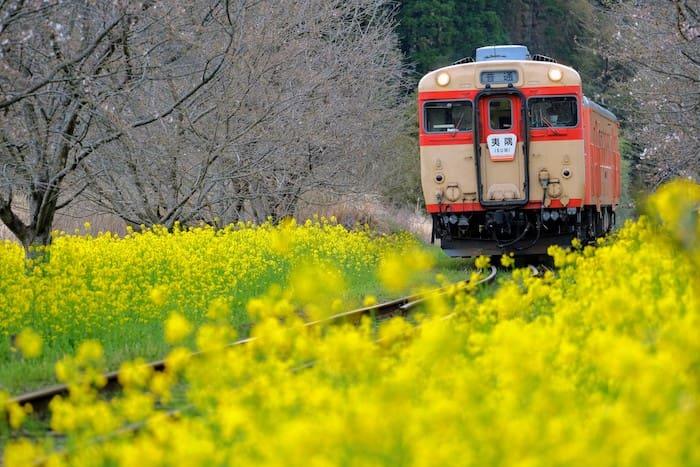 いすみ鉄道と菜の花1