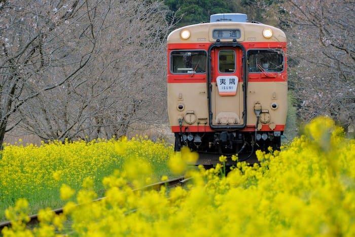 いすみ鉄道と菜の花を連写