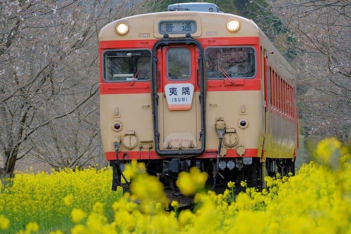 菜の花と列車を連写