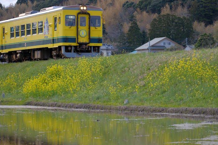 第二五之町踏切の菜の花といすみ鉄道