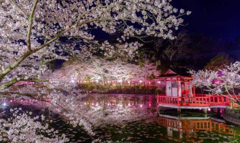 茂原公園の夜桜が美しい