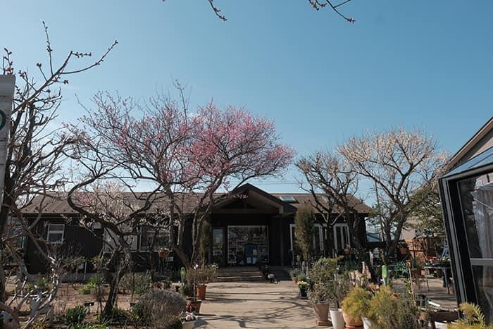 大川原梅園とハーブ園