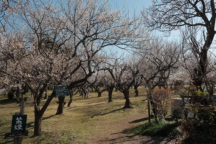 大川原梅園とハーブ園の様子