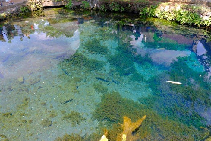 忍野八海の水の透明度が凄い