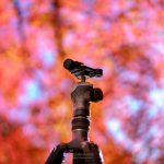 千葉の一番早い紅葉を撮影